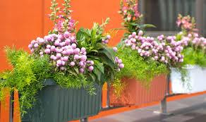 delight photograph indoor house plants favorable house plants