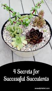succulent kits 2785 best succulents images on pinterest gardening plants and