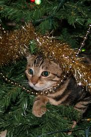 Cat Climbing Christmas Tree Video We Wish You A Stress Free Christmas Pursuit By The University Of