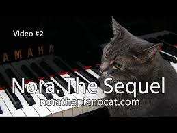 Cat Playing Piano Meme - nora the piano cat the sequel better than the original youtube