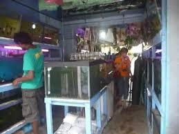 sri lanka ශ ර ල ක ceylon ornamental fish zoo shop galle