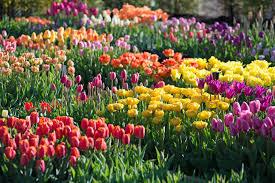 blooming flowers spring blooming flowers archives longfield gardens
