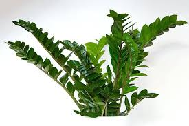 indoor plants that need no light trending low light plants ideas on indoor plants low houseplants