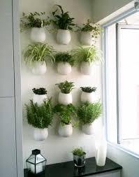 plante pour cuisine mur végétal de plantes aromatiques dans une cuisine