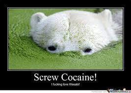 Bear Cocaine Meme - wasabi by jadecube meme center