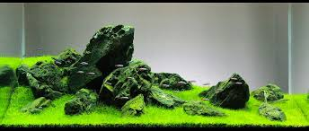 Aquascape Chicago The Most Amazing Tank Aquascape Aquascape Ideas