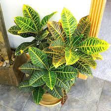 Indoor Plants Low Light Hgtv by 100 Easy Care Indoor Plants Zamioculcas Zamiifolia Indoor