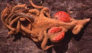 origin of angiosperms