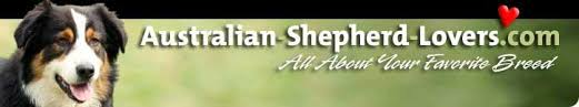 australian shepherd lovers australian shepherd lovers newsletter issue 038 great news