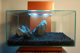 going to set up a fluval edge the planted tank forum