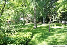 backyard trees picture