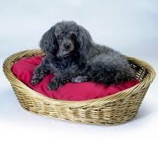 Bed Shoppong On Line Buy Snoozer Wicker Dog Basket And Bed Medium Navy Online Best