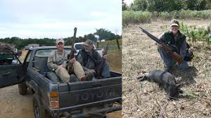dog hunting truck hog hunting with an air rifle afield on airguns