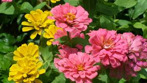 12 Best Plants That Can by The Best Plants To Grow In Full Sun In Southwest Virginia Garden