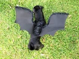 1 pet costume bat costume black wings dog cat costume