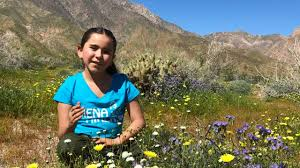 anza borrego superbloom siena hiker youtube