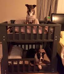 Bunk Bed For Dogs Design Bunk Beds Tips For Choosing Great Bunk Beds