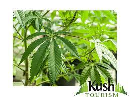 Colorado Marijuana Dispensary Map by Colorado Marijuana Laws 13 Things You Need To Know Kush Tourism