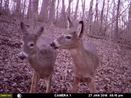 When Do Deer Shed Their Antlers by Deer Biology Hunting Advice And Tips For Serious Deer And Turkey