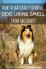 enlever odeur urine canapé enlever odeur urine canapé collection et comment enlever
