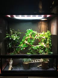 Zoo Med Lights by Zoo Med Tropical Uvb Heat Light Kit Chameleon Forums