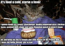 Funny Cold Meme - it s feed a cold starve a fever lolcats lol cat memes