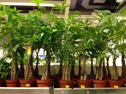 houseplants you canu0027t kill bromeliad plant care how to grow
