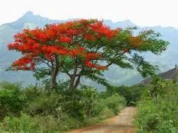 geowonderland the legend of the poinsettia mexican folktale