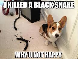 Dog Owner Meme - lol s club 盪 laugh out loud s club 盪 super dog