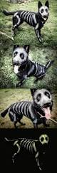 10 diy halloween dog costumes that won u0027t drive them crazy holidappy