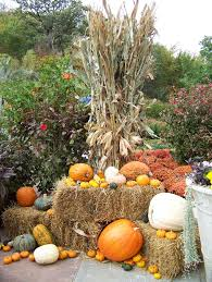 thanksgiving 1620 all the dirt on gardening 11 12