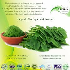 organic drumstick moringa plant manual dried solar dried leaves