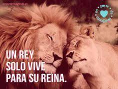 imagenes de leones salvajes gratis imágenes de leones cariñosos amor de león imágenes gratis y