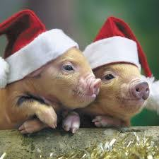 the christmas pig christmas poetry downey books