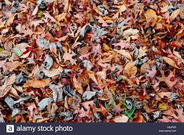 Different Shades Of Red Autumn Leaves In Different Shades Of Red U0026 Orange Cover The Ground