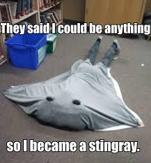 Stingray Meme - stingray