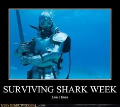 Scuba Meme - very demotivational scuba very demotivational posters start