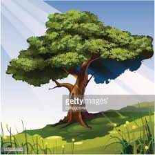 big tree vector getty images