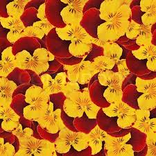 flowers in bulk background from and yellow colors in bulk flowers