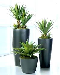 good inside plants great indoor plants low light pretzl me