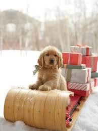 25 dog christmas pictures ideas christmas dog