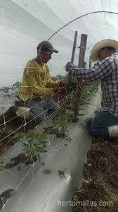 trellising system hortomallas your crop support