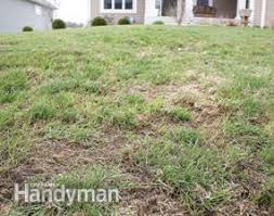 How To Cut Weeds In Backyard Lawn Care How To Repair A Lawn Family Handyman