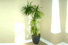 sunlight l for plants beautiful indoor plants best of that do not need sunlight or 7