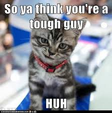 Internet Tough Guy Meme - lolcats tough guy lol at funny cat memes funny cat pictures