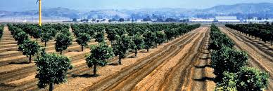 Anaheim Zip Code Map by When Orange County Was Rural And Oranges Actually Grew There Kcet