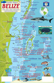 Great Barrier Reef Map Belize Maps Dive Fish Id Cards