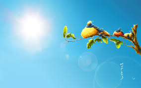 bird free hd top most downloaded wallpapers page 110
