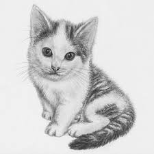 drawn kittens pencil sketch pencil and in color drawn kittens