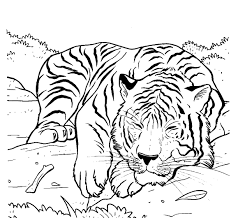tiger sleeping coloring pages for kids gfn printable lions and